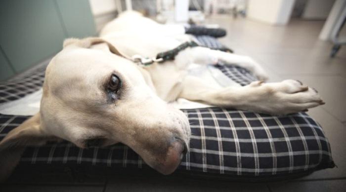 Суставная патология у собак крем от боли в суставах ног купить