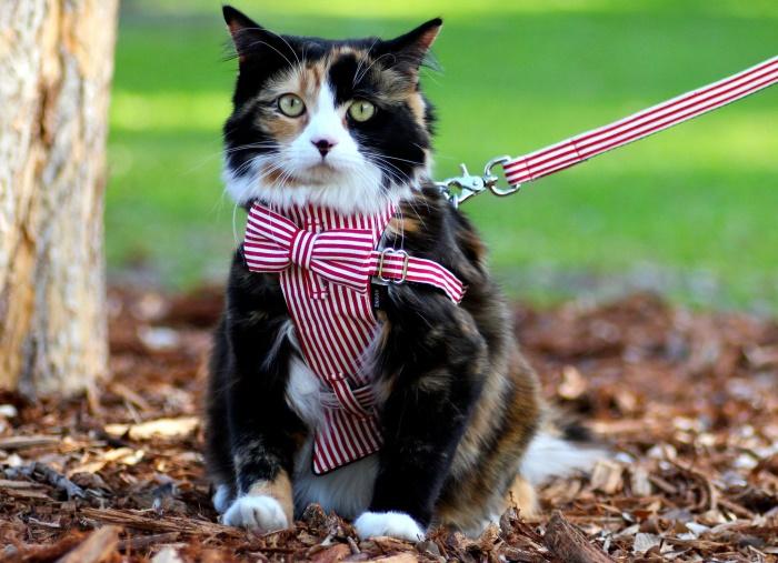 Как сделать шлейку для кошки своими руками в домашних 655