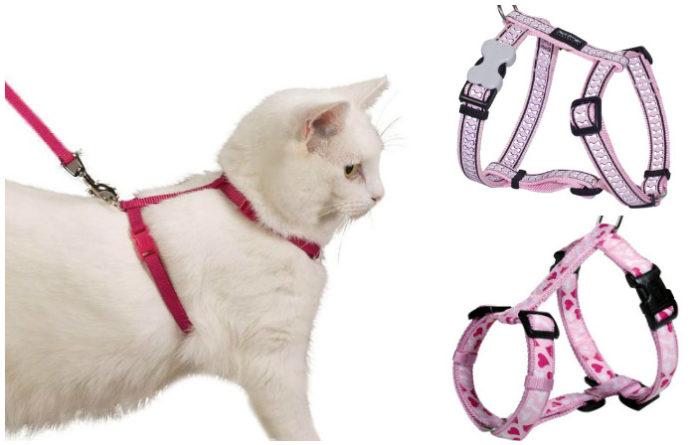Как сделать шлейку для кошки своими руками в домашних 219