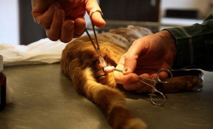 Как помочь пописать коту в домашних условиях 422