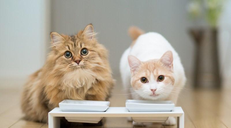 Как готовить еду для кота в домашних условиях - wikiHow