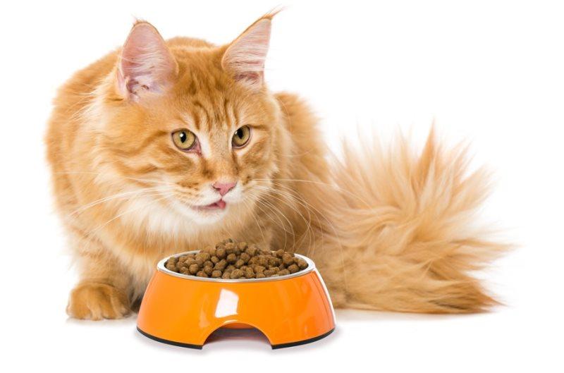 Что поможет коту от запора в домашних условиях 444