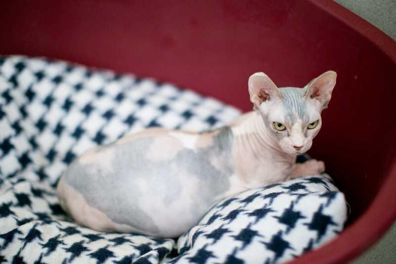 Как понять, что кошка рожает: симптомы, поведение, первые роды, Звери дома