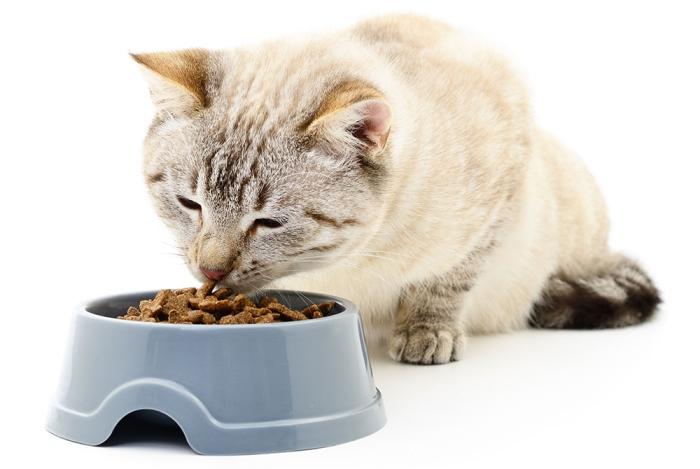 Советы ветеринара, чем кормить кота при мочекаменной болезни. Чем кормить кота при мочекаменной болезни.