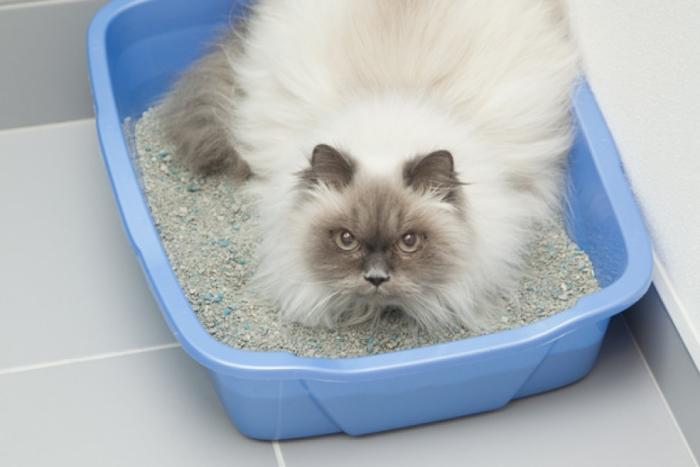 Как давать Смекту котёнку — инструкция по применению и дозировка. Как давать котенку «Смекту» при поносе: действие, дозировка, рекомендации Как давать смекту кошке при поносе дозировка