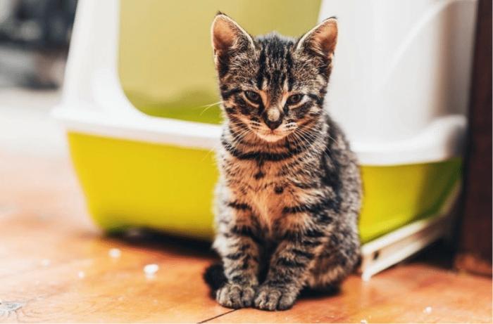 Смекта кошке при поносе дозировка