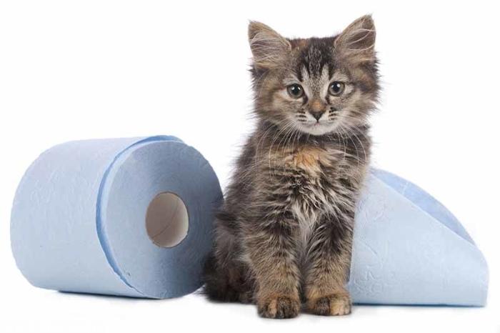 Как лечить понос у котят