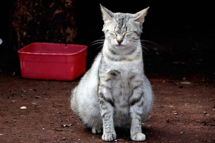 Кошка Перед Родами Понос - Кошки и Собаки