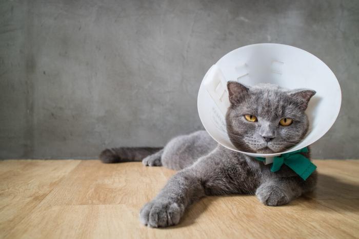 Как сделать воротник для кошки фото 630
