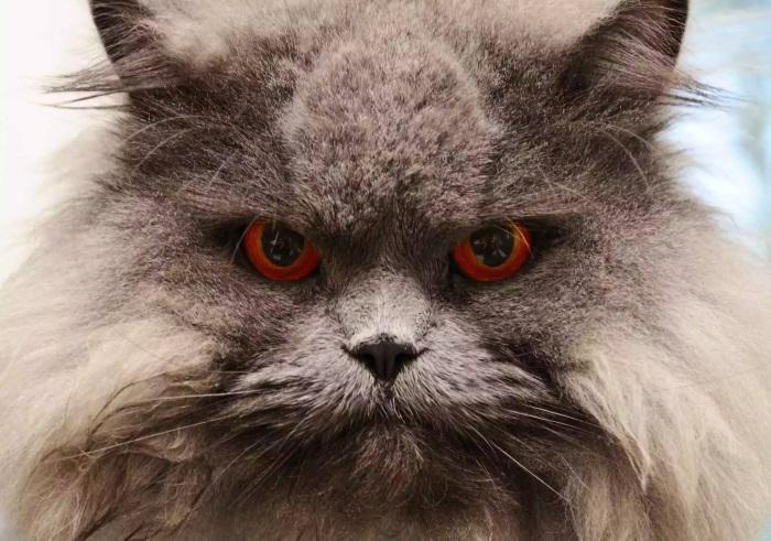 Почему у кошек 9 жизней? Легенды, мифы и правда