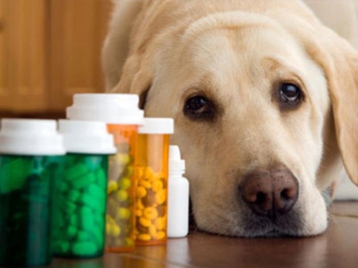 Можно ли дать собаке левомицетин при поносе