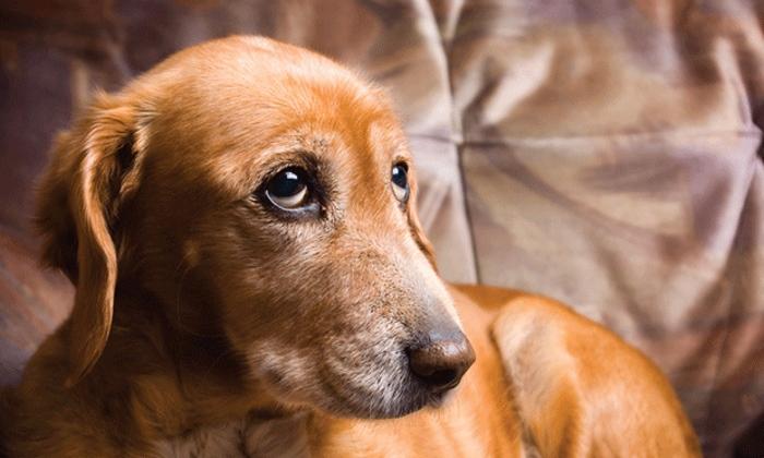 Лечение смещения шейного позвонка у собаки