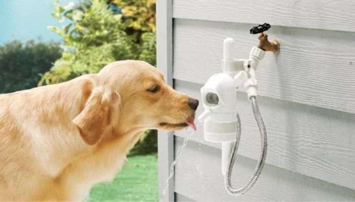 сколько воды нужно собаке в день