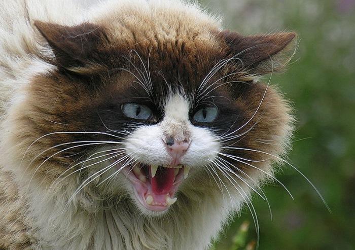 Что если заразиться бешенством. Как передается бешенство у кошек
