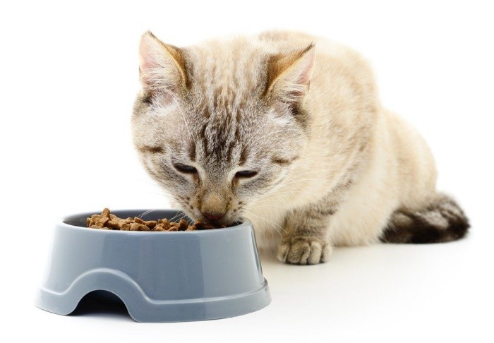 Как откормить кошку чтобы была толстой