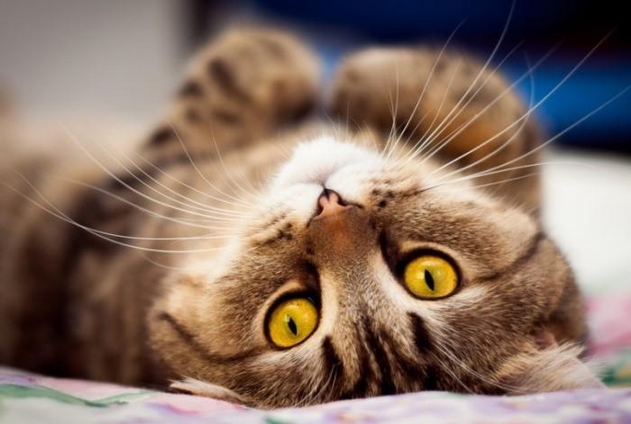 У кошки в области сосков новообразование АНТИ-РАК