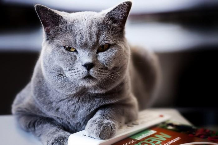 Эпилепсия у кошек причины симптомы и лечение