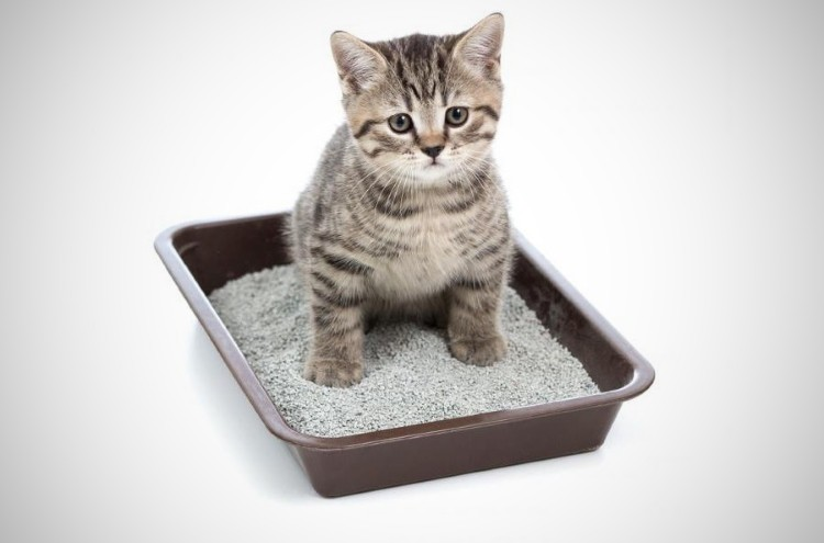 Понос у котенка, что делать в домашних условиях? Причины, чем лечить, что дать от поноса котенку 1 2 3 4 5 6 7 месяцев