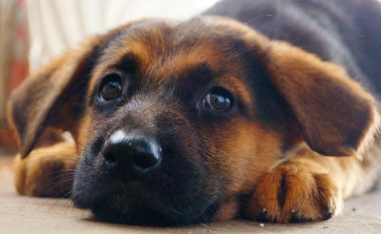 Понос у щенка после глистогонки причины последствия лечение