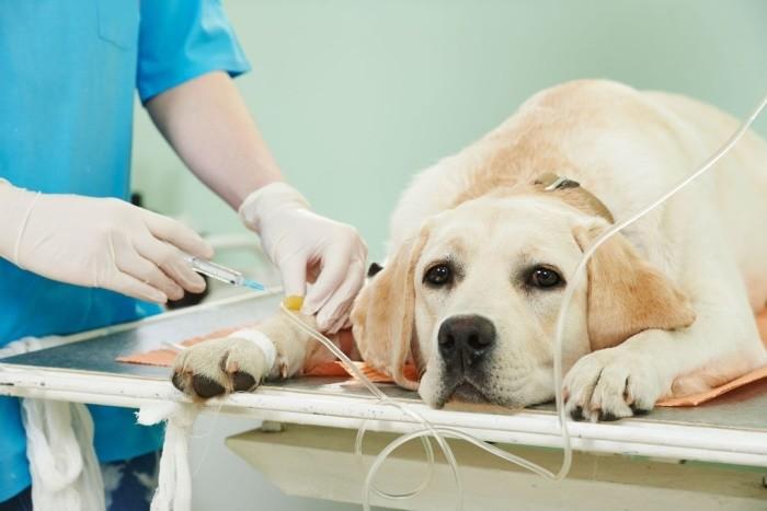 химия лечение рака у собак