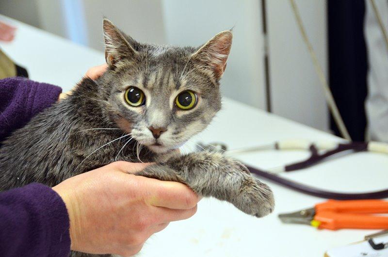 Химическая кастрация котов суть метода препараты способ ввода
