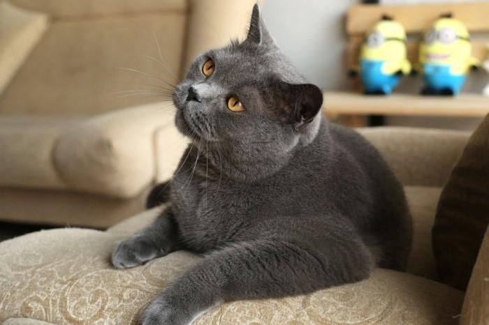 Меняется ли характер кошки после стерилизации важные особенности
