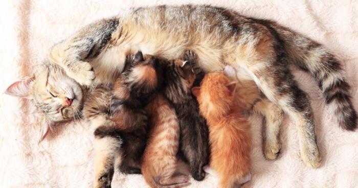 Как отлучить котят от кошки и прекратить лактацию