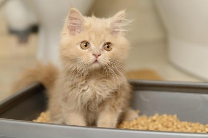Можно ли коту дать Лоперамид от поноса?