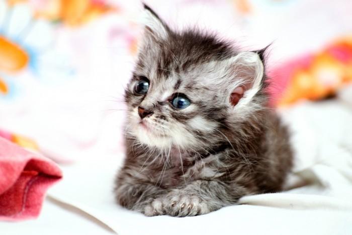 Можно ли дать кошке Лоперамид от поноса как не навредить