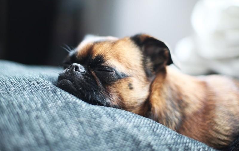 Собака родила мертвого щенка, что делать?