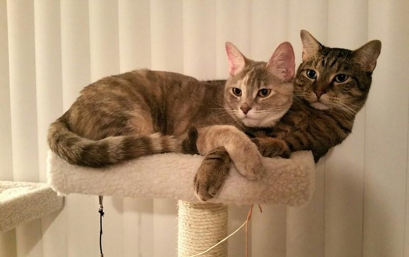 Почему кастрированный кот пытается делать садку на кошек или предметы