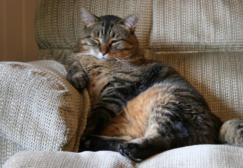 Кот кастрированный натуралка