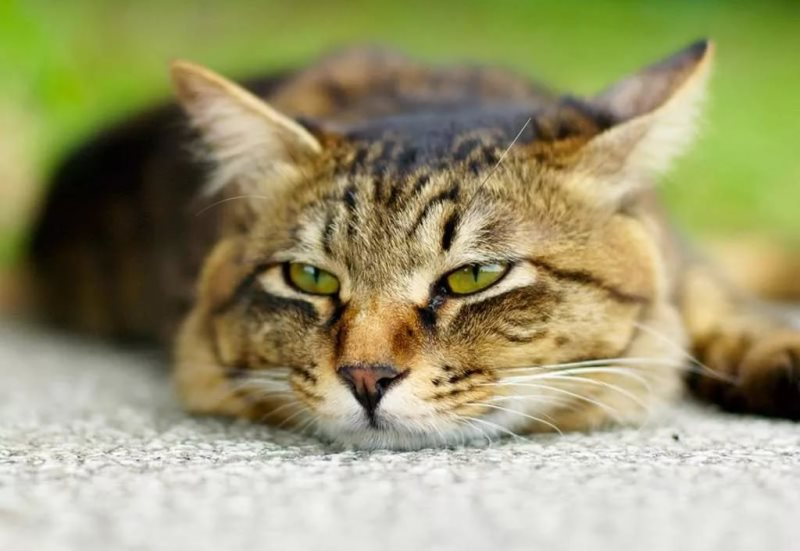 Кошка съела отравленную мышь Как определить оказать неотложную помощь и лечить отравление