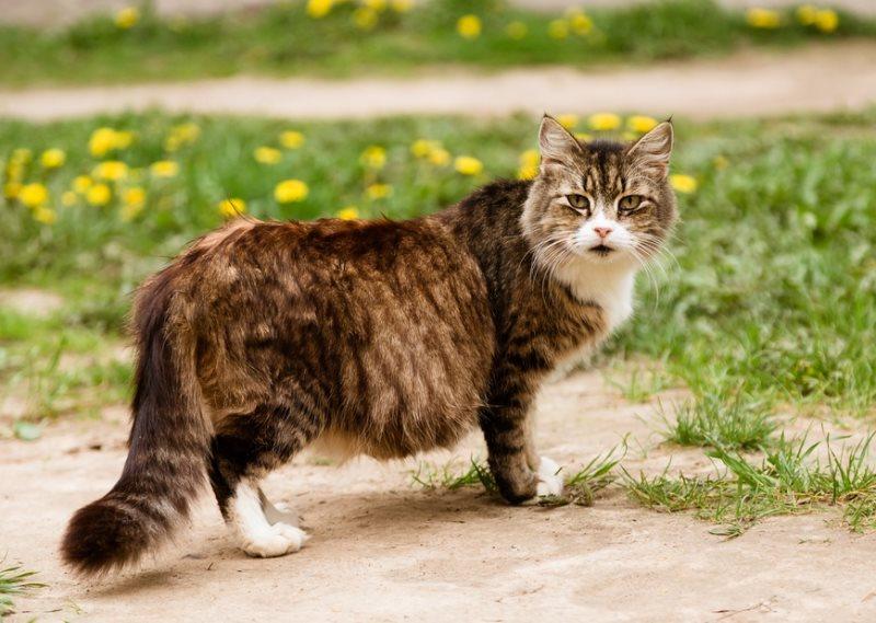 Роды у кошки признаки осложнения как помочь кошке принять роды