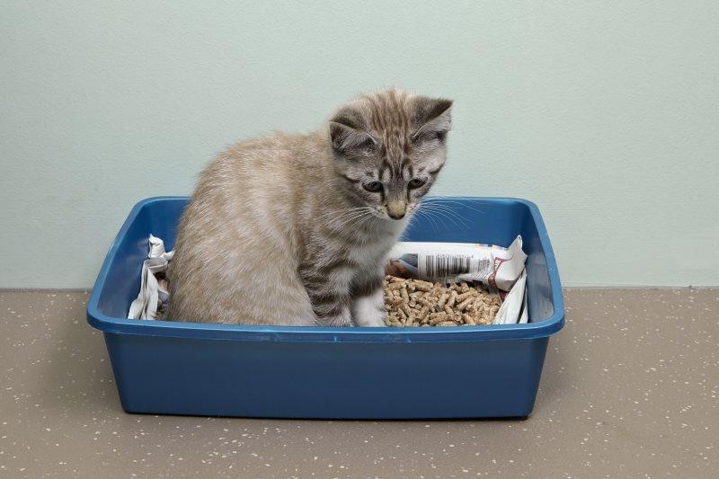 Дюфалак при запоре у кошек: инструкция по применению