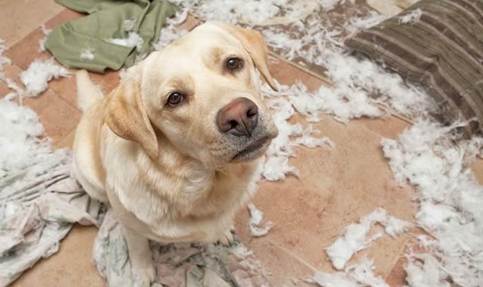 "Если ваша собака грызет мебель — Блог ветклиники ""Беланта"""