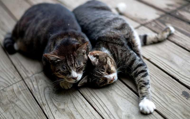 Кот или кошка как определить пол
