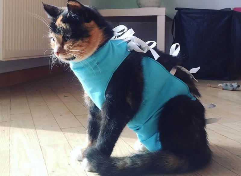 Лучший возраст для стерилизации кошки плюсы и минусы периодов