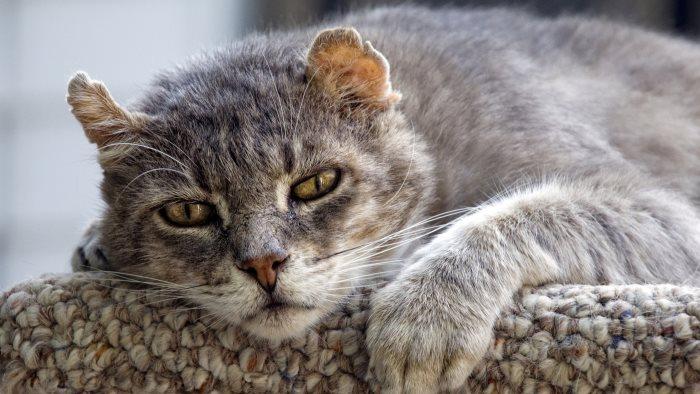 Как умирают кошки почему уходят признаки как понять что умирает