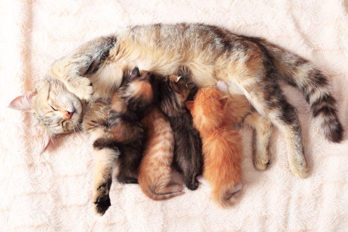 Народные средства от глистов у кошек: как быстро вывести