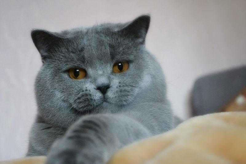 У кота маленькие глисты в кале