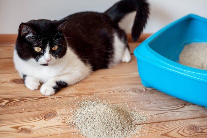 Глисты у кошек как выглядят
