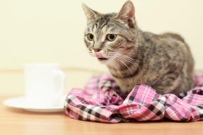 Как кормить кошку после стерилизации