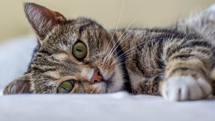 Кастрация кота на дому подготовка плюсы минусы