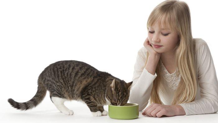 Пищевая аллергия на роял канин у кошки Аллергия на роял канин у кошки особенности проявления