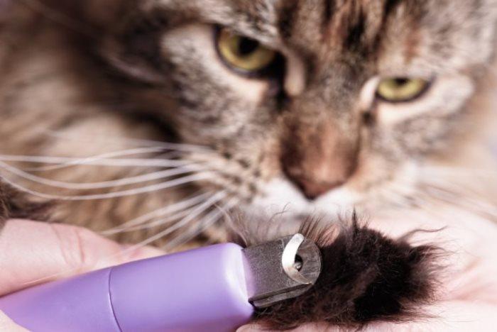 Со скольки месяцев можно стричь когти котятам