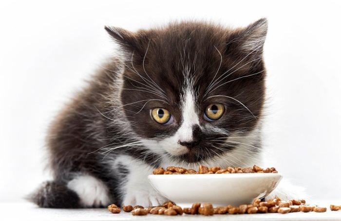 Кот не ест сухой корм что делать