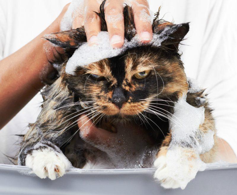 Шампунь от блох для кошек и котят