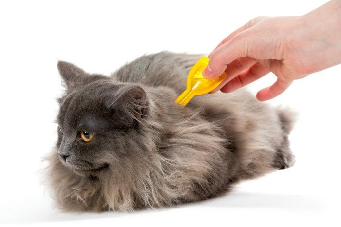 Как кошке наносить капли от блох