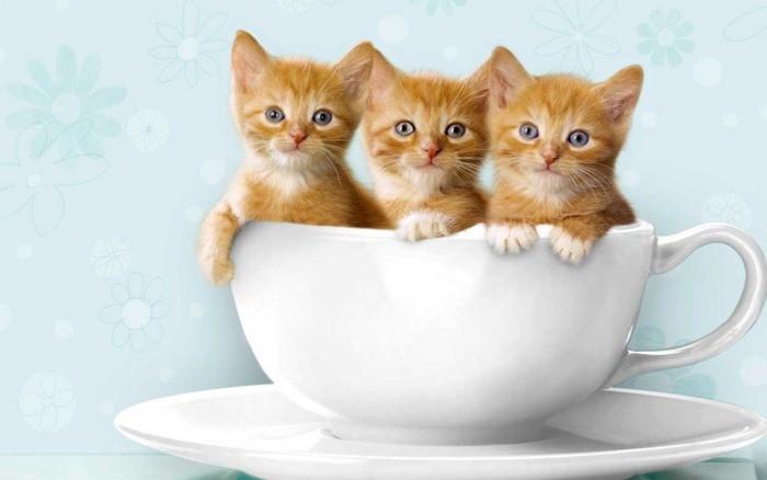 Сонник рыжий котенок в комнате